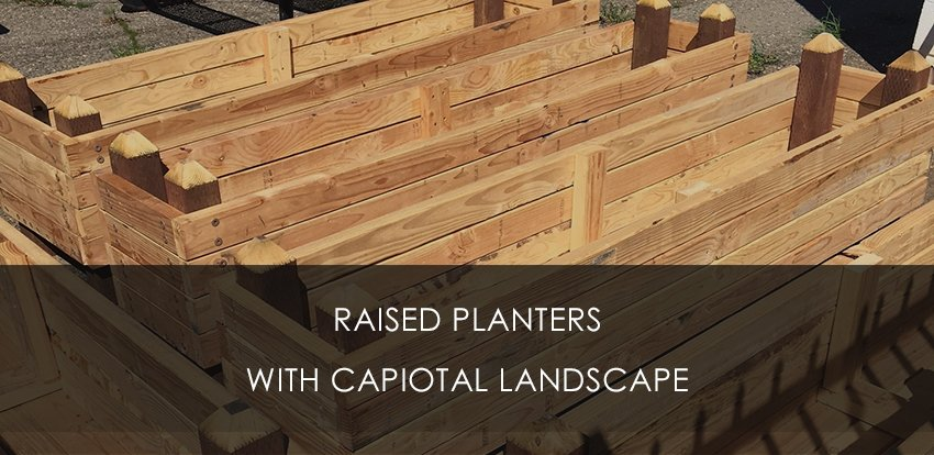 Raised Garden Planter with Capital Landscape